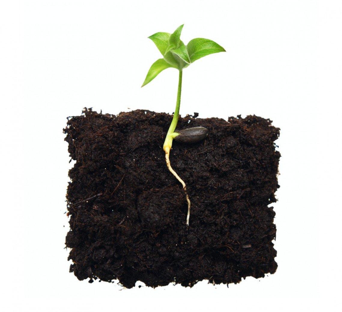 Средства защиты растений от Бизон-Тех