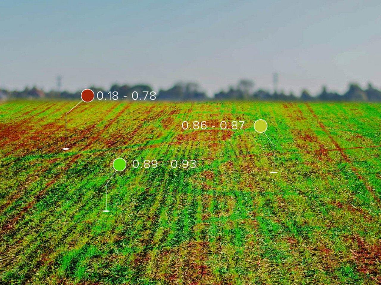 Система моніторингу посівів