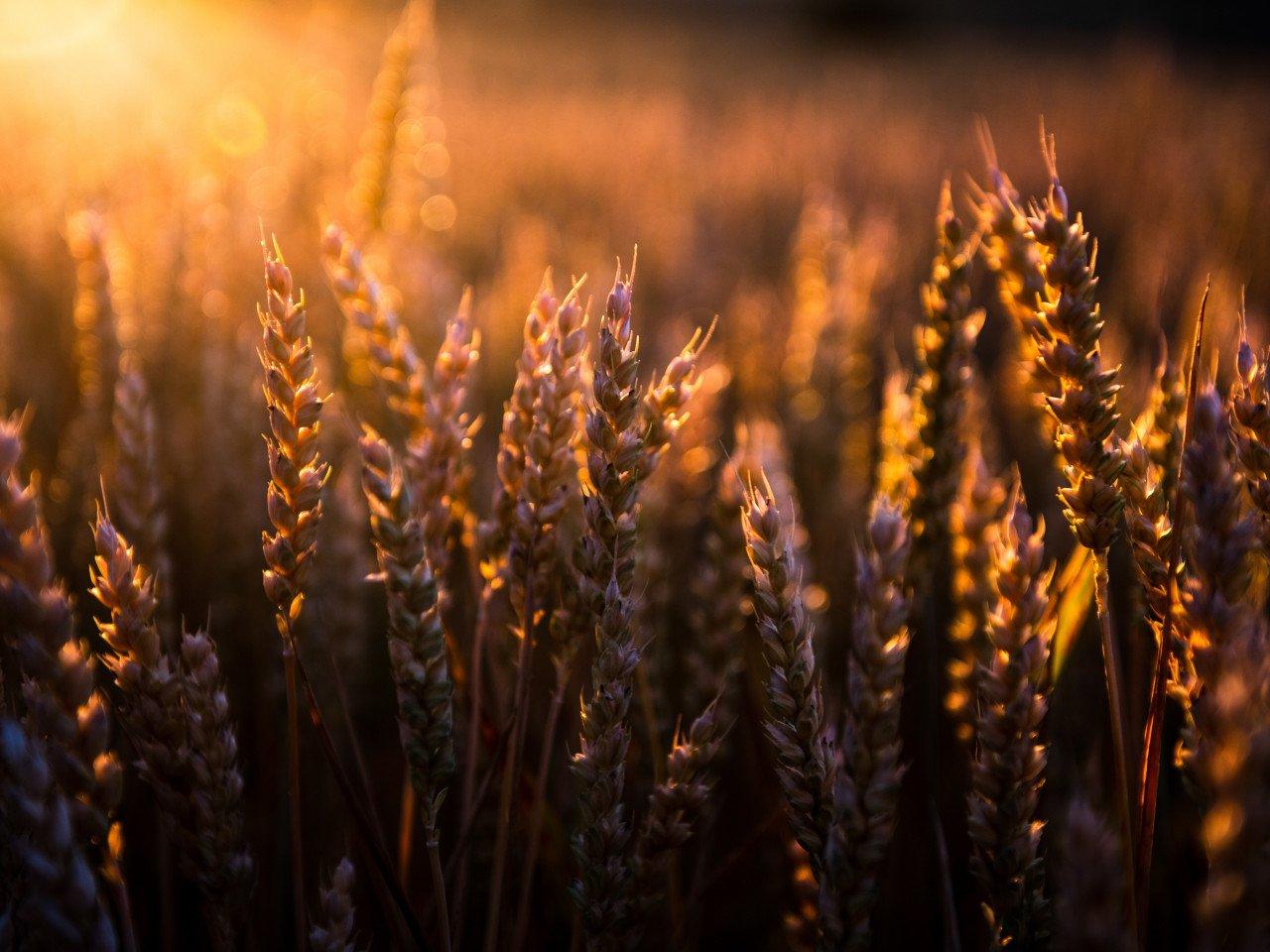 Якісні пестициди в Україні